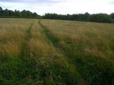 Sweyne Park grass 2