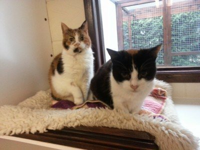 Buffy and Fergie - - two cats looking for a home