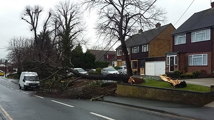 Down Hall Road has been closed by a fallen tree. The fire service, police and electricity people have been in attendance..