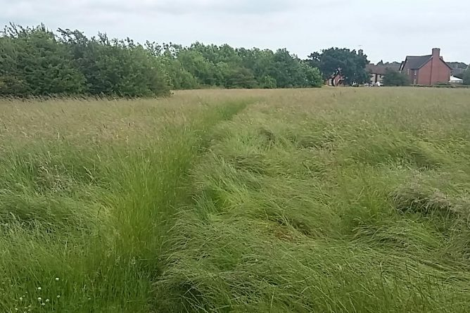 grasssweyne park